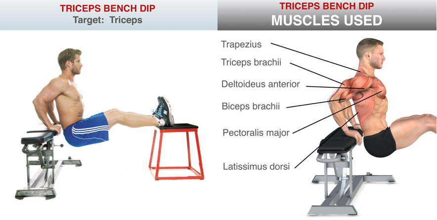 How To Build Your Triceps At Home