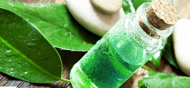 Tea Tree: The Hair Growth Miracle Worker
