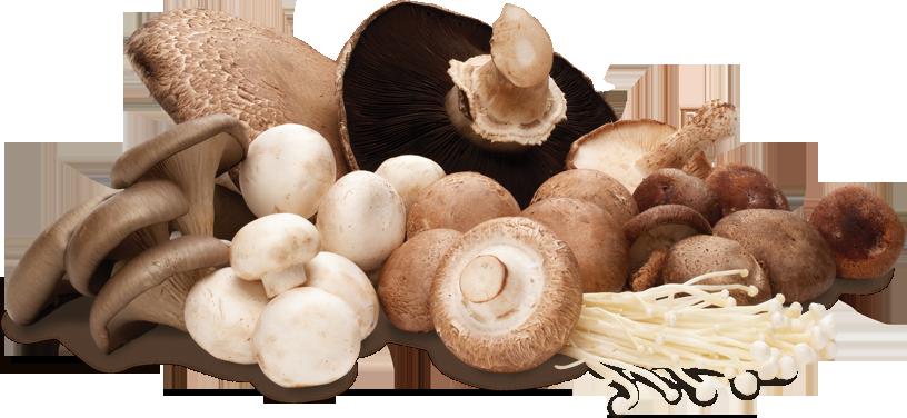 (Source: mushrooms.ca)