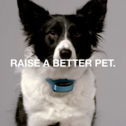 Game Over: Doggy Wearables Were Inevitable