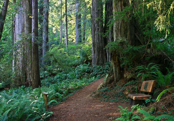 (source: redwoodhikes.com)